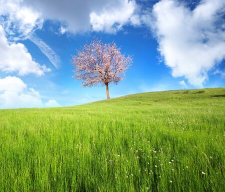 Green meadow in mountain and spring tree. Composition of nature.