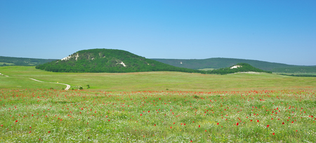 Green meadow and spring flowers in mountain. Composition of nature.