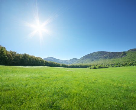 Green meadow in mountain at sunny day. Composition of nature.