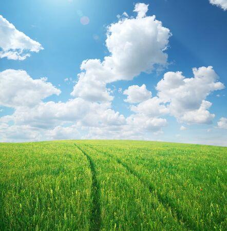 Photo pour Green spring meadow and way to dream. Nature design. - image libre de droit