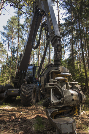 Foto de forestry harvester during a stoppage among trees in the forest - Imagen libre de derechos