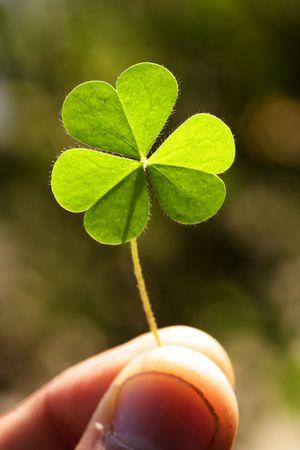 Photo pour Holding a clover leaf - image libre de droit