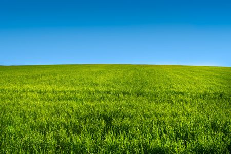 Photo for Green grass meadow with blue sky in summer - Royalty Free Image