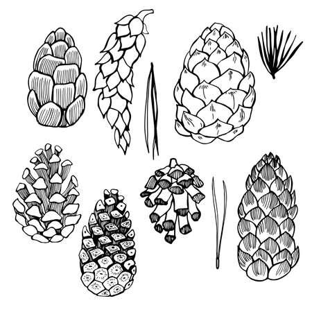 Illustration pour Set of hand drawn pine cones. Vector sketch illustration. - image libre de droit
