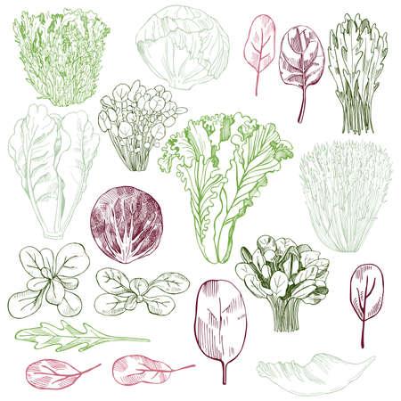 Illustration pour Hand drawn different kinds of lettuce. Vector background. - image libre de droit