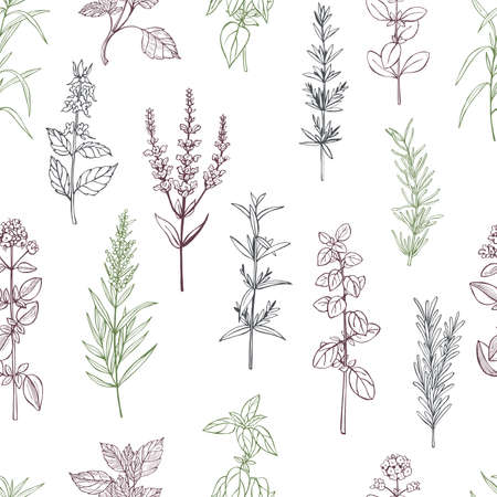 Illustration pour Hand drawn spicy herbs. Vector seamless pattern. - image libre de droit