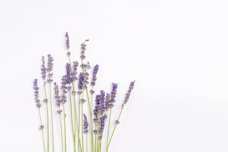 Photo for bouquet of violet lilac purple lavender flowers arranged on white table background. Top view, flat lay mock up, copy space. Minimal background concept. Dry flower floral composition isolated on white - Royalty Free Image