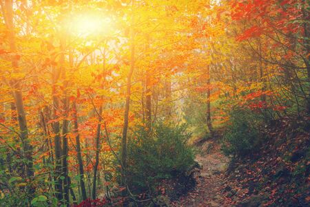 Photo pour Path in natural park with autumn trees. Sunny autumn picturesque forest landscape with sunlight. Fall trees with colorful leaves background. Footpath in autumn morning scene colorful forest nature - image libre de droit