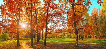 Photo pour Autumn forest landscape. Gold color tree, red orange foliage in fall park. Nature change scene. Yellow wood in scenic scenery. Sun in blue sky. Panorama of a sunny day, wide banner, panoramic view. - image libre de droit