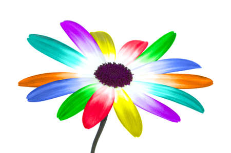 Abstract image of a daisy with it's petals changed to the colours of the rainbow, isolated on a white background.