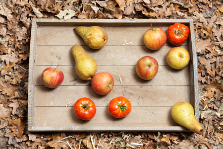 Pumpkins, apples, pears, tomatoes and straw on a wooden plate.の写真素材