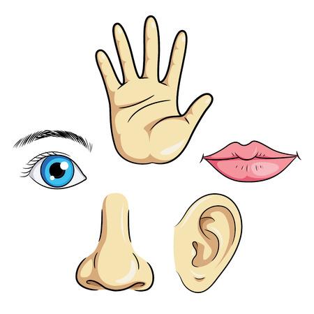 Illustration of eye, ear, nose, lips  hand.