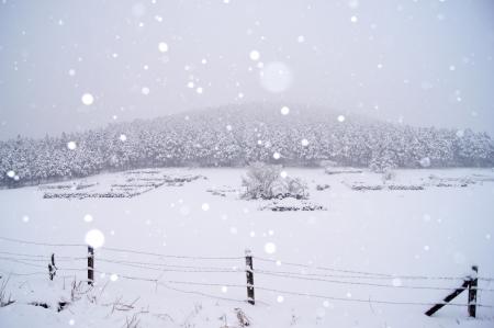 snowy mountain forest in jeju