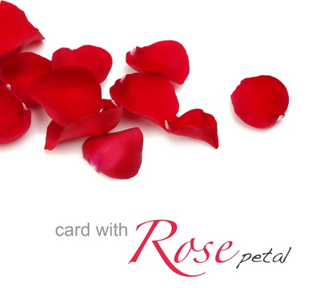 Photo for rose petals - Royalty Free Image