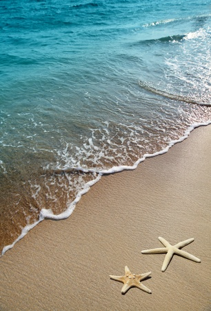 Foto de starfish on a beach sand - Imagen libre de derechos
