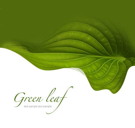 green leaf backgroundの写真素材