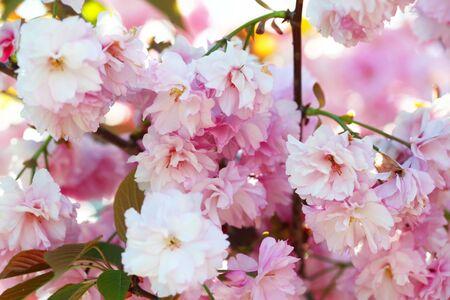 Photo pour Flower spring bouquet with leaf.  Soft focus. Nature blur background. Pink (lilac) color. - image libre de droit