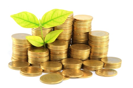 Gold coins and plant. On a white background
