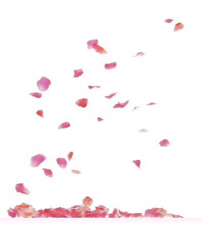 Falling rose petals. Isolated on white background.