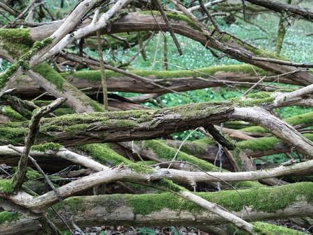 Moss on windbreak