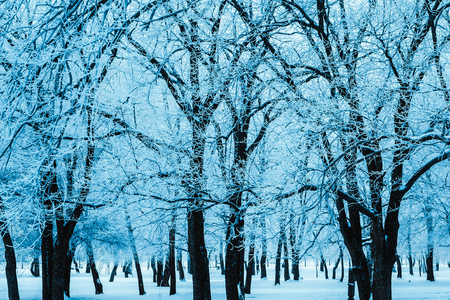 Photo pour winter forest and branches in the snow during the day. - image libre de droit