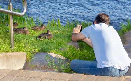 Brave photographer and wild ducks led by Drake
