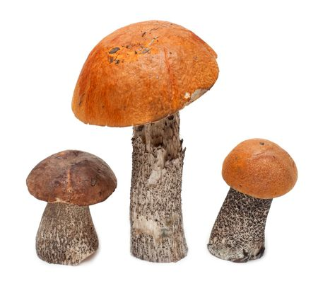 Three mushrooms stand insulated on white background