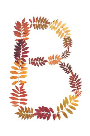 Letter B from alphabet from autumn sheet of rowanberry