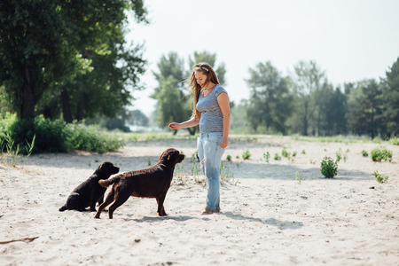 beautiful girl is playing with brown labradors