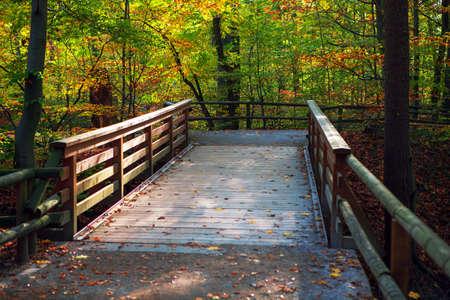Wooden footbridge in autumn park . Walking in fall season nature