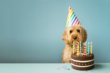 Photo pour Cute dog with party hat and birthday cake - image libre de droit