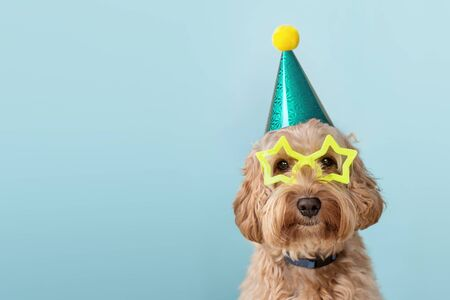 Photo pour Cute dog at a birthday party wearing party hat and star glasses - image libre de droit