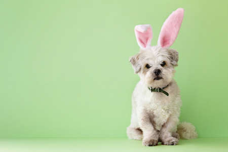 Photo for Small white dog dressed up for Easter - Royalty Free Image
