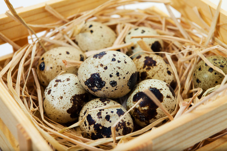 Quail eggs in coconut nest, Studio shot. White background.