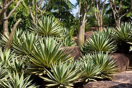 Cactus pavilion in Nong Nooch Tropical Botanical Garden, Pattaya, Thailand.