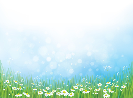 Illustration pour nature background, white daisy flowers on blue bokeh background. - image libre de droit