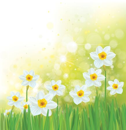 Illustration for Vector daffodil flowers. Spring  background. - Royalty Free Image