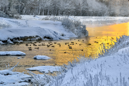 Photo pour Winter golden sunset and fog over little warm river with ducks floating in the water. Frosty weather, trees and grass on the banks are covered with fluffy hoarfrost - fairy tale of wintert landscape - image libre de droit