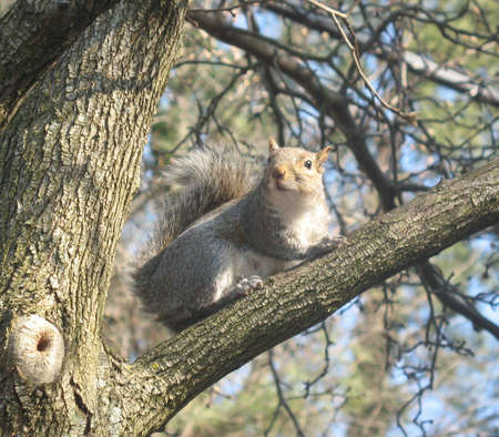 Squirrel view on a limb