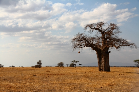 A lone baobab tree stands against the African savannah