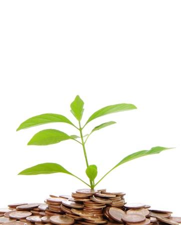 Green tree on money land