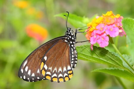 Photo pour Beautiful butterfly with flower and green background - image libre de droit