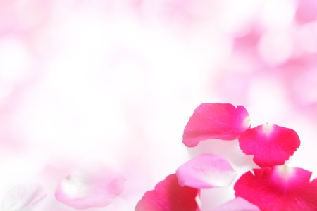 Rose pink petal abstract background with white copy space