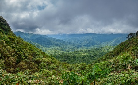 Cloud forest covering Bosque Nuboso Monteverde, Costa Rica
