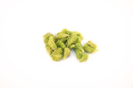 A pile of spruce sprouts, isolated on white background