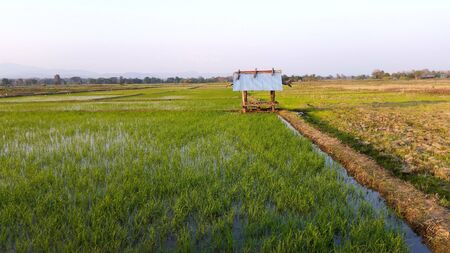 Photo for Riceland with sky royalty-free stock picture. Natural landscape view, Rice land which can be starting to grow in the winter months. Farmer has start new season of grow rice at Northern of Thailand. - Royalty Free Image