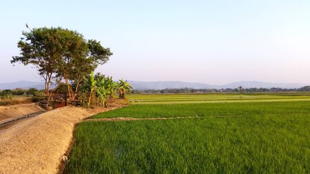 Photo for Riceland with sky natural view each day. Rice fields that are starting to growing in the winter months. Farmer has start new season of grow rice at Chiang Rai, Thailand. Royalty-free stock images. - Royalty Free Image