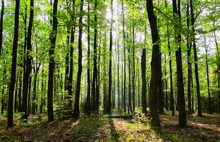Foto de Spring forest - Imagen libre de derechos