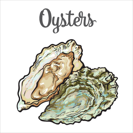 Illustration pour Fresh oyster, sketch style vector illustration isolated on white background. Drawing of oysters as luxury seafood delicacy. Edible underwater creature, healthy organic seafood or shellfish food - image libre de droit