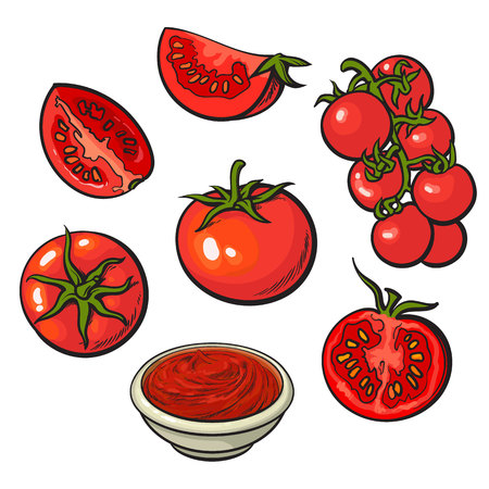Illustration pour Set of sketch style vector illustrations of ripe red tomatoes isolated on white background. Whole, half and quarter tomato, top and side view, bunch of cherry tomatoes, bowl of tomato sauce - image libre de droit